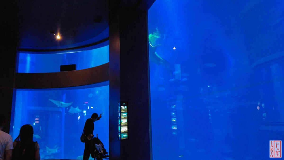 Osaka Aquarium Kaiyukan / Aquarium, Japan, Kaiyukan, Kansai, Osaka, 大阪, 日本, 水族館, 海遊館, 関西
