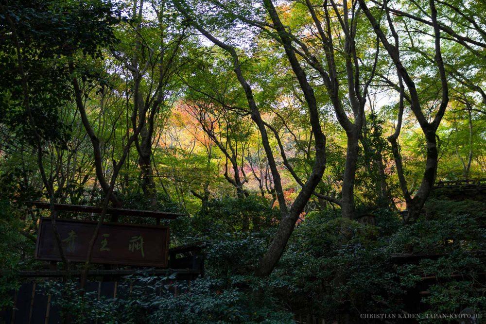 Gioji Temple, Arashiyama, Kyoto / Gioji, Japan, Kansai, Kioto, Kyoto, Tempel, Temple, お寺, 京都, 仏教, 仏閣, 日本, 祇王寺, 関西