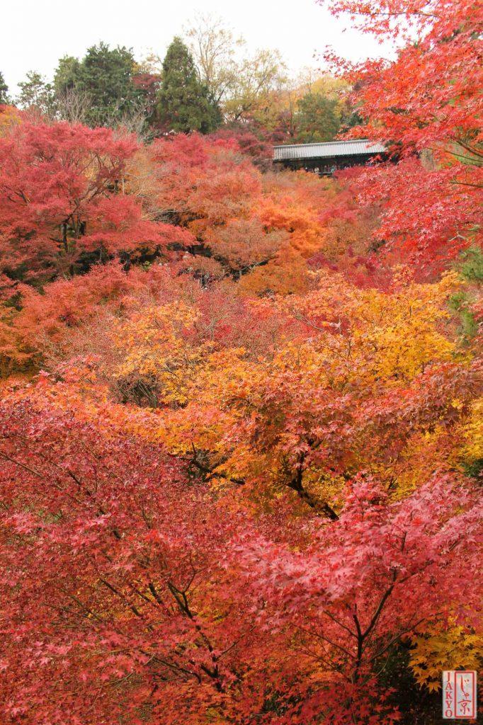 Tofukuji Temple, Kyoto / Canon EOS 60D, Momiji, Pflanze, Pflanzen, Plant, Tempel, Temple, Tofukuji, お寺, もみじ, 仏教, 仏閣, 東福寺, 植物, 紅葉