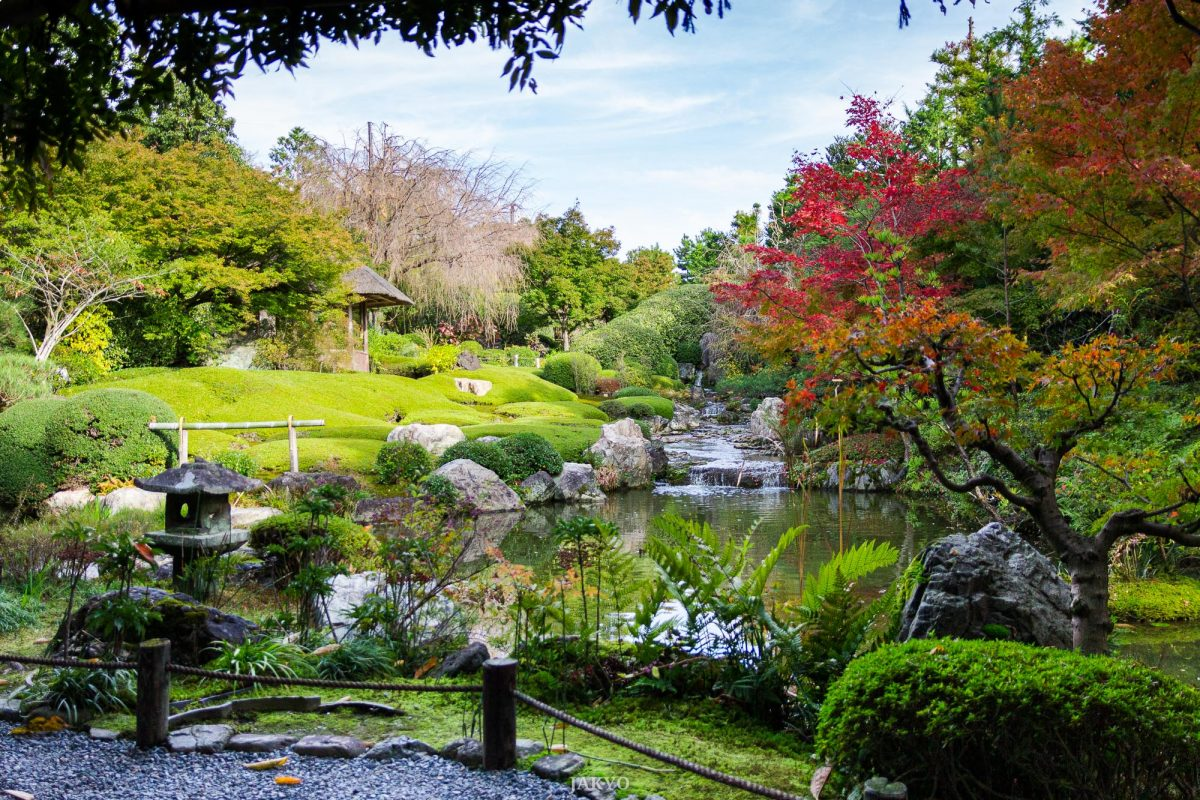 Taizoin, subtemple of Myoshinji, Kyoto / Autumn, BeOfJap, Best of Japan, Herbst, Herbstfärbung, Jahreszeit, Japan, Kansai, Kioto, Koyo, Kyoto, Momiji, Myoshinji, Natur, Nature, Pflanze, Pflanzen, Plant, Pond, Season, Subtempel, Taizoin, Teich, Tempel, Temple, autumn colors, fall, fall foliage, subtemple, お寺, こうよう, もみじ, 京都, 仏教, 仏閣, 塔頭, 妙心寺, 季節, 日本, 日本一番, 植物, 池, 池泉, 泉水, 秋, 紅葉, 自然, 退蔵院, 関西