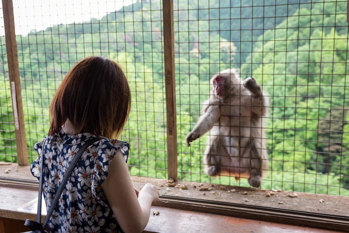 Iwatayama Monkey Park at Arashiyama, Kyoto / Affe, Animal, Arashiyama, Iwatayama Affenpark, Iwatayama Monkey Park, J2016, Japan, Kansai, Kioto, Kyoto, Monkey, Tier, Tiere, 京都, 動物, 嵐山, 嵐山モンキーパークいわたやま, 日本, 猿, 関西