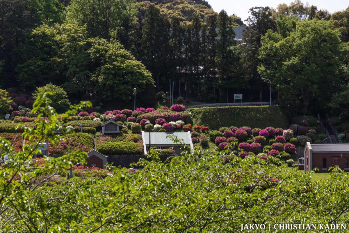 Keage no Tsutsuji, Kyoto / J2019, Japan, Kansai, Kioto, Kyoto, 京都, 日本, 関西
