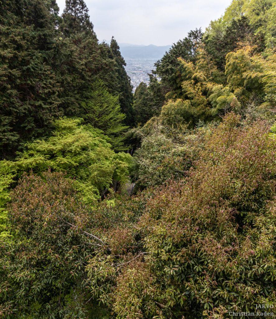 Tanukidanisan Fudoin temple, Kyoto / J2019, Japan, Kansai, Kioto, Kyoto, 京都, 日本, 関西