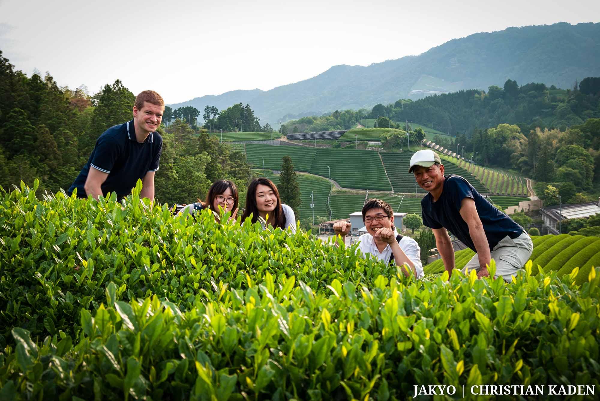 Tea fields in Wazuka, Japan / J2016, Japan, Kansai, Roten-en, Tea, Tea Plantation, Tee, Teeplantage, Wazuka, offenes Teefeld, open tea field, 和束町, 日本, 茶, 茶園, 茶畑, 関西, 露天園