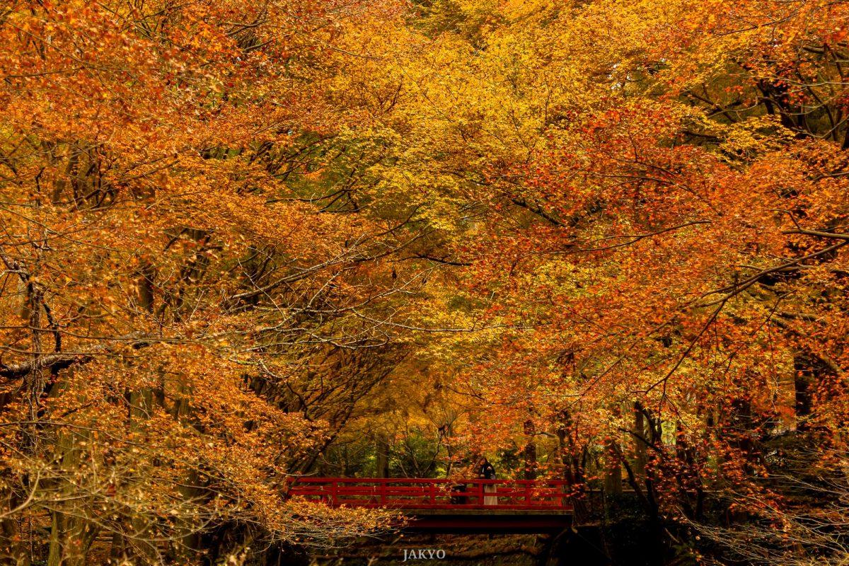 Sanzenin temple, Ohara, Kyoto / Architecture, Architektur, BeOfJap, Best of Japan, Canon EOS 60D, Garten, Shutterstock, garden, 庭, 建築, 建築術, 日本一番