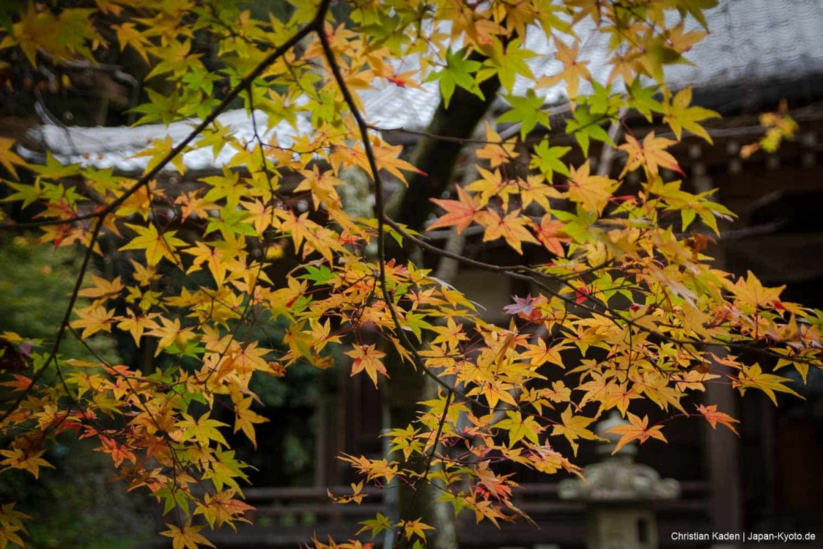Shojiji Tempel, Kyoto / Autumn, Herbst, Herbstfärbung, Jahreszeit, Japan, Kansai, Kioto, Koyo, Kyoto, Natur, Nature, Season, Shojiji, Tempel, Temple, autumn colors, fall, fall foliage, お寺, こうよう, 京都, 仏教, 仏閣, 勝持寺, 季節, 日本, 秋, 紅葉, 自然, 関西